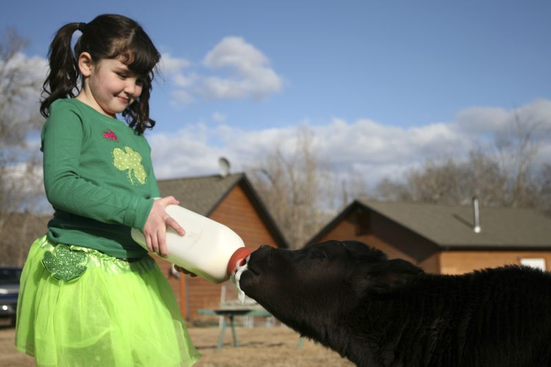 Isabella with Baby Cow